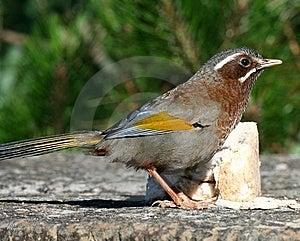 Wild Bird On Ground Stock Photo - Image: 9471850