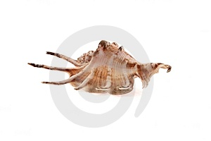 Sea Cockleshells Royalty Free Stock Image - Image: 9471996