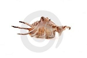 Sea Cockleshells Royalty Free Stock Image - Image: 9471996