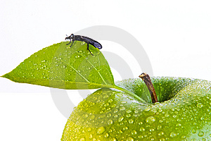 Green Apple And Bug Royalty Free Stock Photo - Image: 9472845