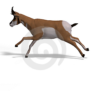 Antelope Stock Images - Image: 9475984
