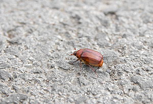 Bug On Tarmac Stock Photos - Image: 9477353