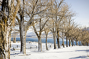 Wintertime Trees Stock Image - Image: 9478551