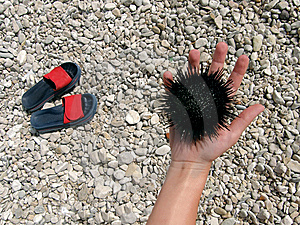 Stone Beach, Slip-on Shoes Hand And Sea Urchin Royalty Free Stock Photos - Image: 9481628