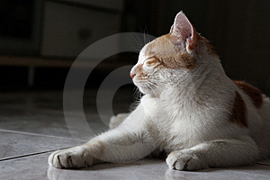Cat Sleeping Stock Photo - Image: 9482660