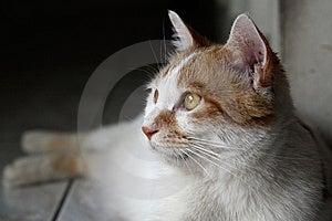 Cute Cat Stock Photo - Image: 9482680