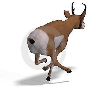 Antelope Stock Photography - Image: 9491412