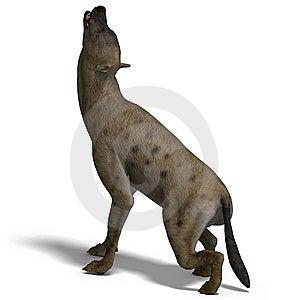 Hyena Royalty Free Stock Photo - Image: 9491475