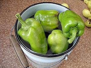 Green  Pepper Stock Image - Image: 9492481