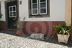 Madeira Snoopy I Stockfotos - Bild: 952273