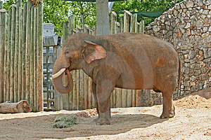 Adult Elephants Stock Photo - Image: 954150