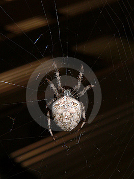 Spider Stock Image - Image: 957871