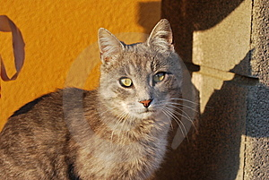 Cat Stock Photo - Image: 9507950