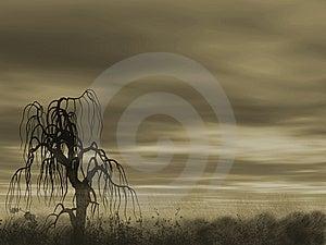 A Be Single Tree Stock Photos - Image: 9512243