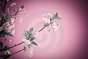 Fantasy Blossom Royalty Free Stock Images - Image: 9527879