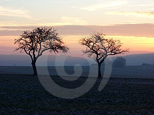 Sunset Winter Trees Royalty Free Stock Photography - Image: 9536407