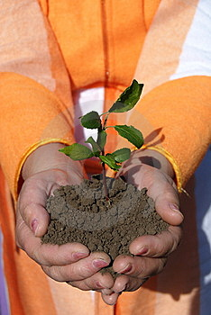 Hands +plant Royalty Free Stock Photos - Image: 9537288