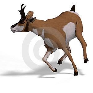 Antelope Royalty Free Stock Photography - Image: 9537787