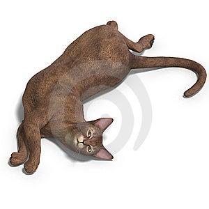 Cat Stock Photos - Image: 9537823