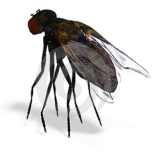 Fly Stock Photography - Image: 9537832