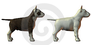 Bull Terrior Dog 3d Model Royalty Free Stock Photography - Image: 9538527