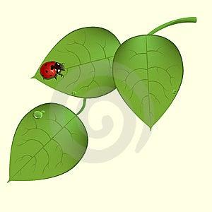 Funky Ladybug Stock Photography - Image: 9539372