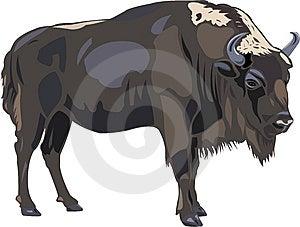 European Bison Royalty Free Stock Photography - Image: 9561547