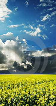 Colorful Landscape Spring Field Full Of Flowers Royalty Free Stock Image - Image: 9565676