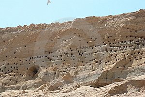 Swallow Nests And Swallows Flying Stock Image - Image: 9567041