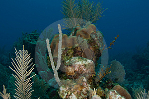 Reef And Sea Fans Stock Photo - Image: 9568750