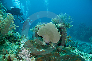 Reef, Sea Fans And Divers Royalty Free Stock Images - Image: 9568849