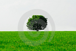 Tree Royalty Free Stock Image - Image: 9569446