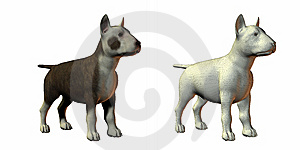 Bull Terrior Dog 3d Model Stock Image - Image: 9571521