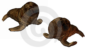 3D Walrus Stock Photos - Image: 9571763