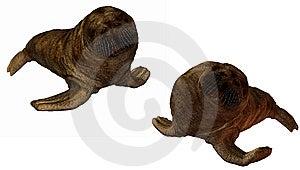 3D Walrus Stock Photos - Image: 9571763