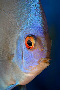 Discus Head Royalty Free Stock Image - Image: 9573606
