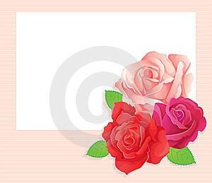 3 Roses Stock Image - Image: 9576451