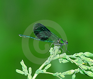 Dragonfly On The  Blade Stock Images - Image: 9581134