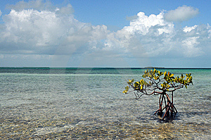 Vacation In Mangrove Cay   Royalty Free Stock Images - Image: 9590409