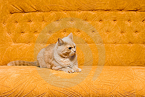Cat On The Sofa Stock Photo - Image: 9590920