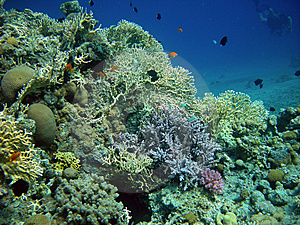 Reef And Diver Stock Photos - Image: 9594443
