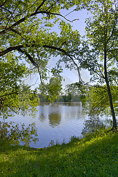 Trees Were Inclined Over Water Stock Images - Image: 9608444