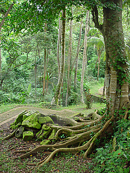 The Tropical Road Going Downwards Stock Photos - Image: 9610483