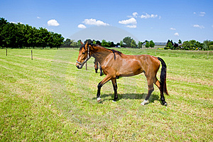 Two Horses Royalty Free Stock Photos - Image: 9612448
