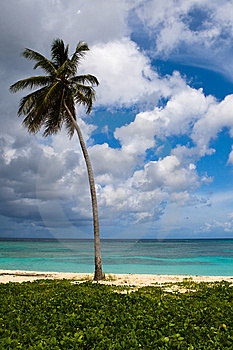 Three Palms On The Beach Island Stock Images - Image: 9613394