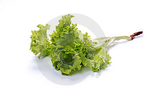 Green Salad Lettuce With A Root Royalty Free Stock Images - Image: 9613409