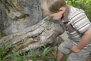 Boy Plays In Hollow Tree Royalty Free Stock Images - Image: 9613639
