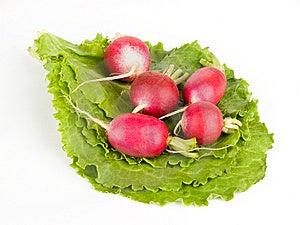 A Few Radishes On Lettuce Royalty Free Stock Images - Image: 9617389
