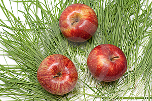 Three Red Apples, Green Herb Stock Image - Image: 9626851