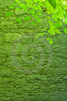 Green Leafs And Stone Wall Royalty Free Stock Photography - Image: 9627287